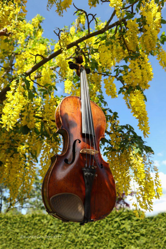 vioolles altvioolles De Vrolijke Viool